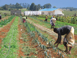 AMPATH established local farms in western Kenya to grow more food for HIV patients being treated at its clinic. A packing center sits in the background.